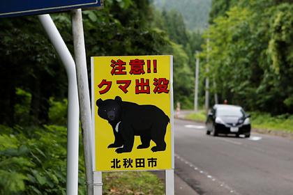 Медведь остался без орешков, пришел в город и покалечил четырех человек