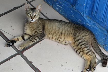 Россиянин спас кошку от избивавших ее палками детей
