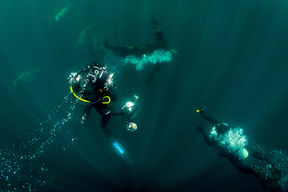 На дне Баренцева и Карского морей нашли углеводороды и сейсмические аномалии