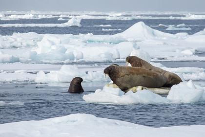 Названы подстерегающие туристов опасности в Арктике