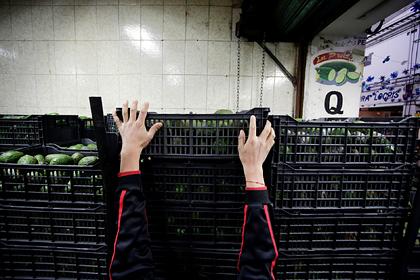 Мексиканские картели начали войну за авокадо