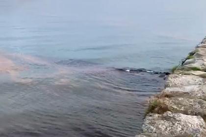 Туристы искупались в море аномального цвета и пострадали