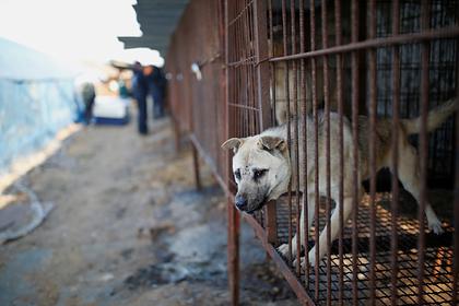 Сеул закрыл последнюю скотобойню для собак