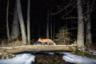 Обыкновенная лисица (рыжая лисица, лат. Vulpes vulpes) попала на снимок благодаря самодельным фотоловушкам в пограничном районе чешского леса. Животное пересекает естественный пешеходный мост. Спокойную атмосферу подчеркивает мягкий снегопад.