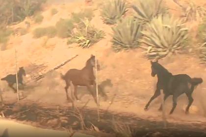 Лошадь вернулась в горящую конюшню и спасла семью от смерти