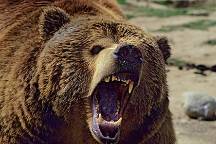 Турист забрел на безлюдную тропу и сразился с медведем