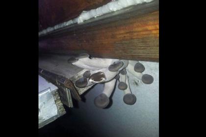 Выросшие в пассажирском поезде огромные грибы удивили пользователей интернета