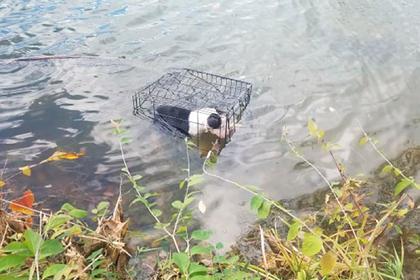 Учитель спас запертого в клетке и брошенного в озеро щенка