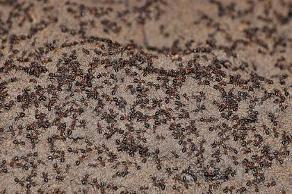 Миллион муравьев-каннибалов сбежали из советского ядерного бункера