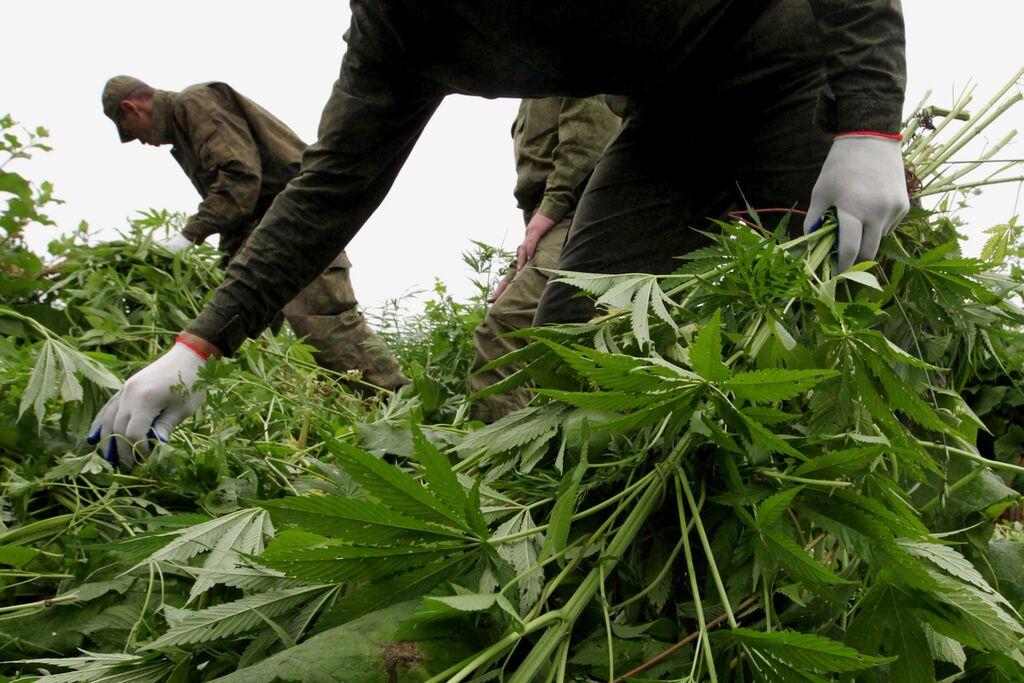 Семена в рязани конопля польза марихуаны для рака