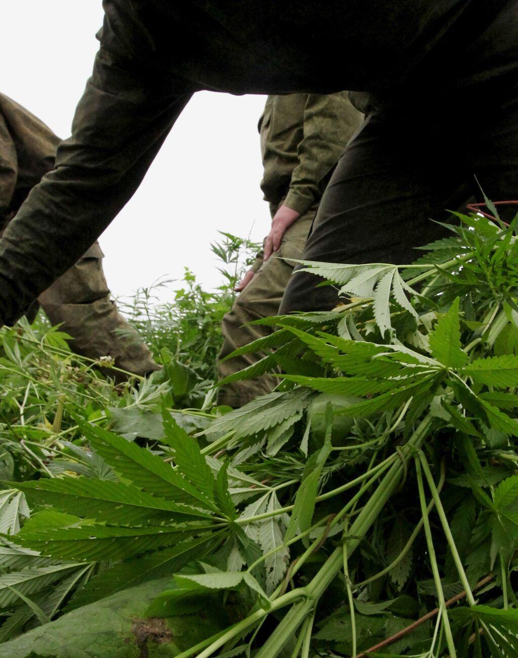 Возраст конопли отравление от марихуаны
