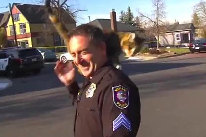 Пестрая кошка напала на полицейского в прямом эфире и побила его хвостом