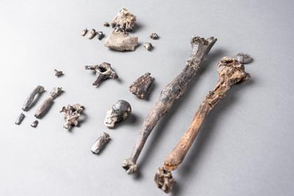 Открыт неизвестный предок человека