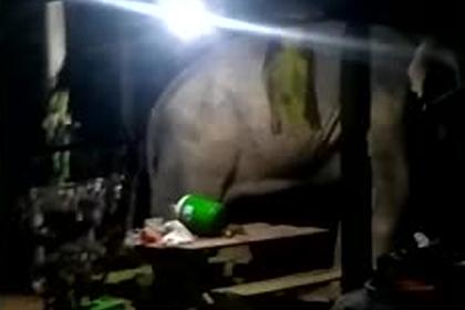 Слон проник в дом и сломал рисоварку