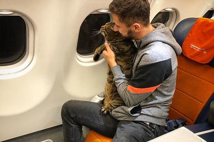Россиянина отказались пускать в самолет со слишком толстым котом