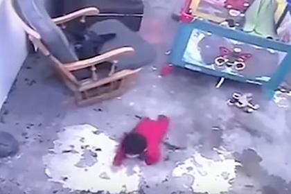 Кошка спасла младенца от гибели и попала на видео
