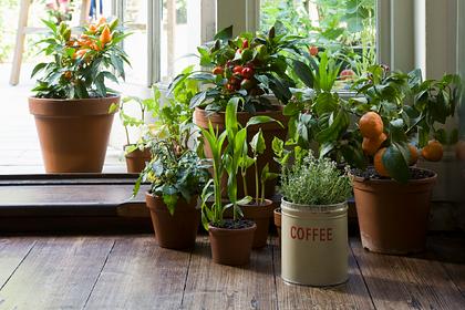 Опровергнут миф о пользе комнатных растений