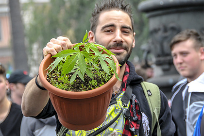 В Эстонии отказались от легализации марихуаны