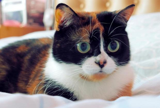Звезда канала Slivki Show — кошка Куки