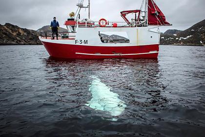 В резвящемся в море ките усмотрели российского шпиона