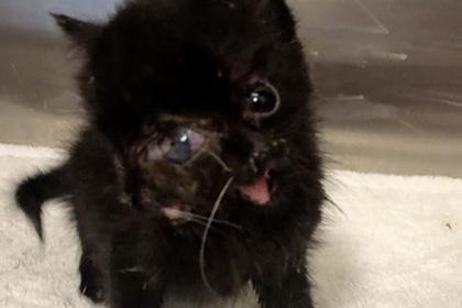 Найден котенок с двумя носами и четырьмя глазами
