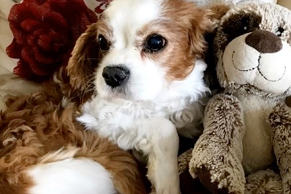 Ветеринары вернули к жизни мертвого пса