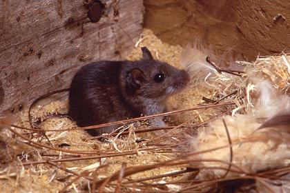 Женщина пожаловалась на мышей в доме и получила оскорбительный совет