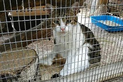 Сбежавшего кота-наркокурьера подменили на «прокурорского»