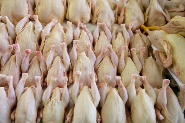 Названы лучшие цыплята в России