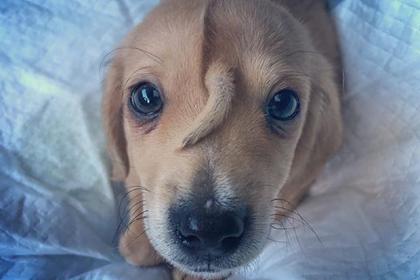 Обнаружен «щенок-единорог»