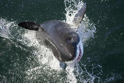 Акула оторвала у дайвера кусок руки