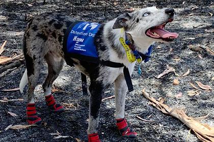 Брошенный хозяевами пес стал спасителем жизней