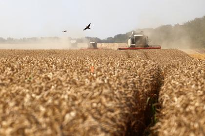 В России вырос урожай
