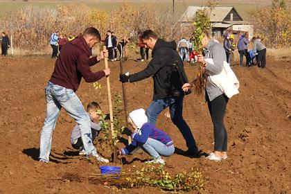 В России стало на пять миллионов деревьев больше