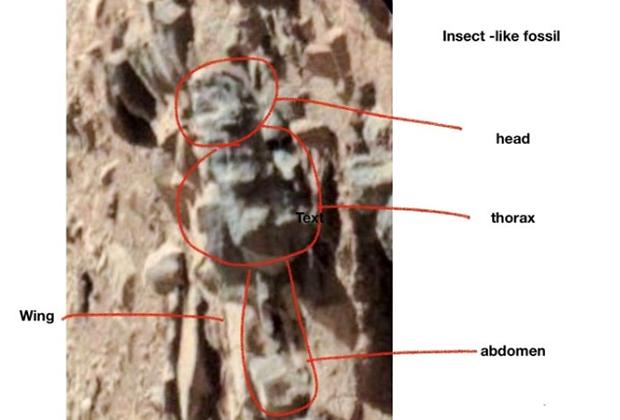 На Марсе нашли насекомых