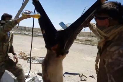 «Фонтанка» назвала имя еще одного предполагаемого участника страшной  казни вСирии
