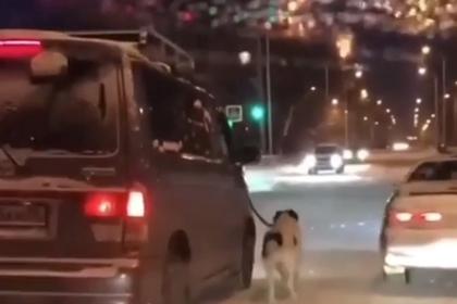Россиянин привязал хромую собаку к машине и поехал