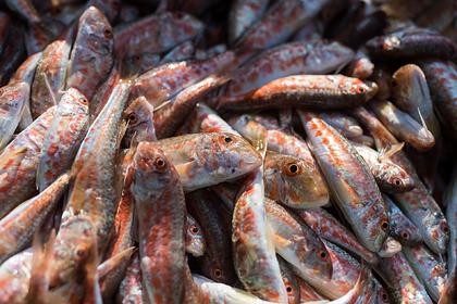 Названы сроки начала торговли рыбой между Крымом и Сирией