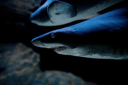 Израильтянин побывал в пасти акулы и осознал свою ошибку
