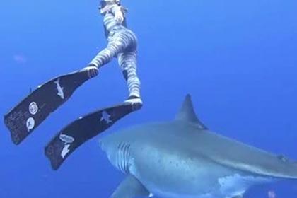 Девушка поплавала возле огромной акулы-людоеда и напугала пользователей сети