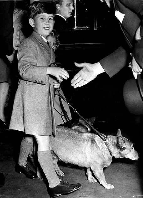 Принц Чарльз и его питомцы — собаки породы корги, 1955 год