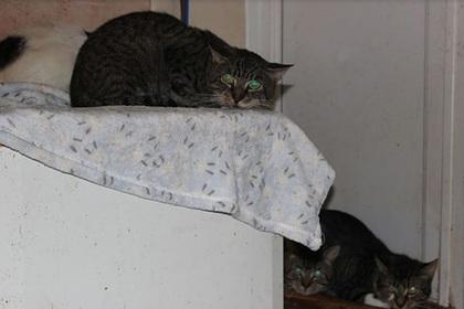 Одинокая женщина завела 40 кошек, не справилась и лишилась их