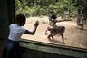 Государство вяло борется за сохранение редких видов, но чиновники прекрасно понимают, что люди ходят за дичью в леса не от хорошей жизни.