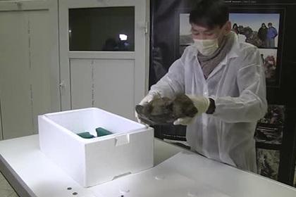 Мумию одного из первых домашних питомцев человека показали на видео
