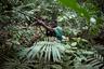 «Наши исследования показывают, что животные разных видов уже почти полностью истреблены вокруг деревень», — признается Микель Баканза, представитель Всемирного фонда дикой природы, работающий в Мбандаке.
