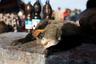 Охотники обычно устраивают небольшой лагерь на берегу реки и день и ночь бродят по джунглям в поисках добычи. Вернуться с пустыми руками нельзя — на кону жизнь семьи. А добытое с таким трудом мясо потом отведают богачи.