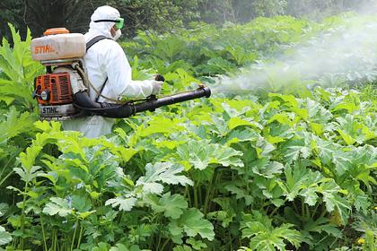 Российские ученые занялись борьбой с сорняками