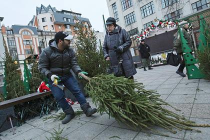 Россиянам дали советы по выбору новогодней ели