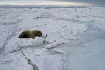 Ученый рассказал о судьбе белого медведя с надписью «Т-34»