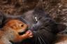 Крымская кошка по кличке Пуша усыновила четырех осиротевших бельчат и кормила их как собственных котят. Маленькие белки жили в зоологическом уголоке Бахчисарайского парка вместе с Пушей и ее котятами как одна большая семья. По словам сотрудников учреждения, к их удивлению, эксперимент удался. Хранительница парка Ольга Фадеева рассказала, что семейство сложилось не сразу: рыжим понадобилось некоторое время, чтобы привыкнуть к новой матери, которую поначалу они побаивались.